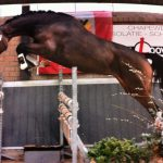 igor1 magic moon